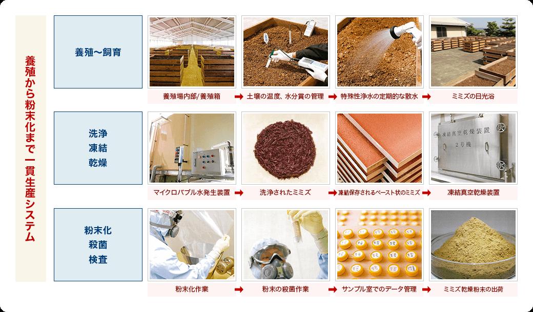 ミミズ乾燥粉末の原料のミミズは、養殖から粉末化まで一貫生産システムで管理されています。